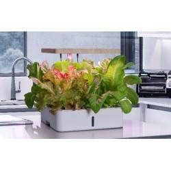 LED växtbelysning LEDlife hydroponisk köksträdgård - Vit, inkl. växtljus, 12 platser, timer, 4L vattentank