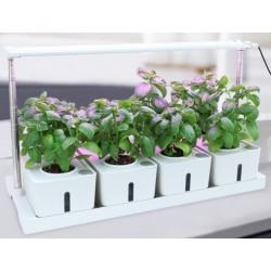 LED växtbelysning LEDlife hydroponisk växtbricka - Vit, inkl. växtljus, 12 platser, 4x2L vattentank